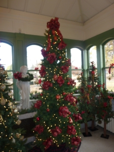 Christmas Trees at Willistead, Windsor